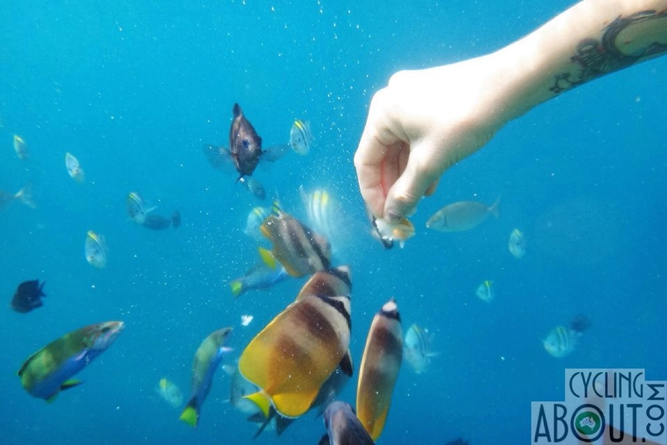 Feeding fish in the Philippines